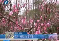 邵武:梅花绽放迎新春