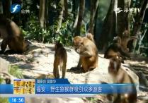福安:野生猕猴群吸引众多游客