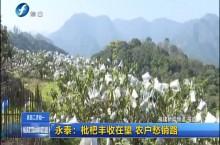 永泰:枇杷丰收在望 农户着急销路