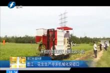 晋江:花生生产寻求机械化突破口