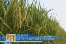 沙县:召开水稻分子设计育种现场观摩会