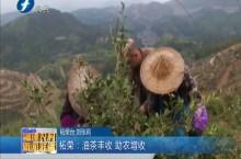 柘荣:油茶丰收 助农增收