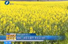 浦城:油菜花盛开 赏花正当时