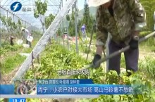 周宁:小农户对接大市场 高山马铃薯不愁销