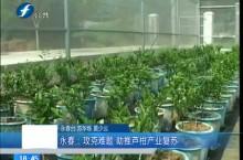 永春:攻克难题 助推芦柑产业复苏