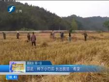 福建农村新闻联播2017-11-19