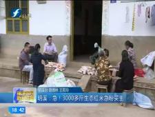 福建农村新闻联播2017-11-18