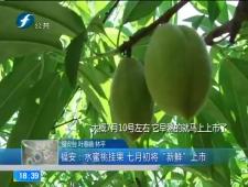 福建农村新闻联播2018-5-23