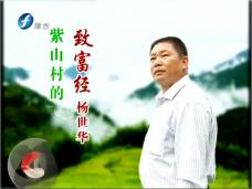 《时代先锋》紫山村的致富经 杨世华