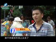 """《时代先锋》下河村的四季""""摇钱树"""""""