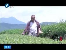 《风物福建》一座茶山一个农场一份乡情