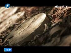 《风物福建》回乡创业 林下生金