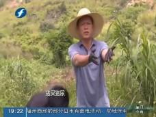 """《现场深一度》数百亩农田变""""粪池"""" 究竟是谁惹的祸?"""