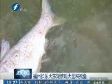 《现场深一度》福州长乐大东湖惊现大面积死鱼(一)