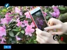 《风物福建》莳花·寻春——漳平老花匠的杜鹃情