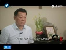 《风物福建》漳州龙海水仙花