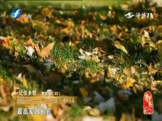 惠远镇——守士护边 尽职尽责
