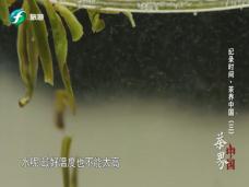 《纪录时间》茶界中国(三)