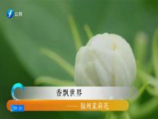 《风物福建》香飘世界——福州茉莉花