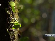 《新闻启示录》守护武夷原生性生态 践行绿色发展新理念