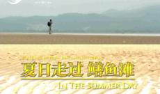 夏日走过鳝鱼滩