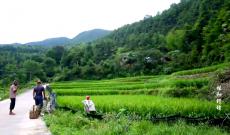 中国梦·福建故事第二季—蛙与野猪