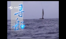 寻船(下)
