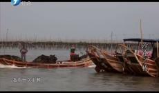 《中国梦·福建故事》汐路之桥