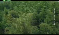 《纪录时间》美丽乡村——江之畔