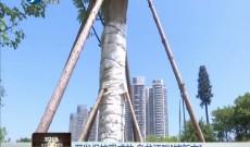 《现场深一度》开发保护现成效 乌龙江畔