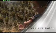 《纪录时间》宫之稻·稻之道·非常稻(二)