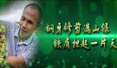 龙岩电视台林锋讲述《梦也绿满山——兰林金》