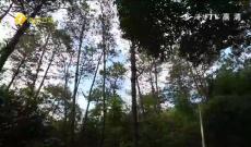 《客家人》原生态之旅