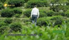 《福建茶文化》第七集《武夷岩茶》