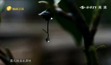 《客家人》武夷山茶文化的传承者