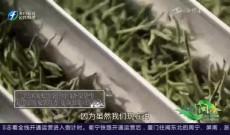 《多彩闽茶》9月20日