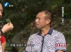 《方言欢语》古廊桥斗茶