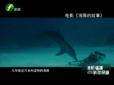 《清新福建旅游报道》电影《海豚的故事》