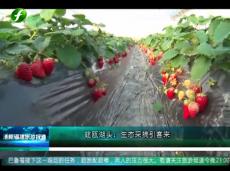 《清新福建旅游报道》建瓯湖头:生态采摘引客来