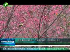 《清新福建旅游报道》万株鲜花绽放 冬日郊游好去处