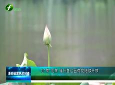 """《清新福建旅游报道》为""""荷""""而来 福州各公园荷花陆续开放"""