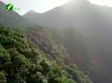 《清新福建旅游报道》厦门全域旅游受热捧