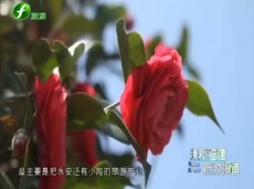《清新福建旅游报道》重点开展针对性整治