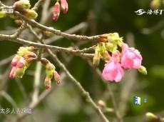《清新福建旅游报道》厦门:高颜值生态花园城市 绿化覆盖率超43%