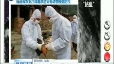 福建省农业厅部署洪涝灾害动物疫病防控