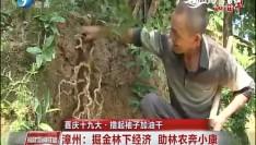 喜庆十九大·撸起袖子加油干 漳州:掘金林下经济 助林农奔小康