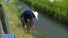 福建:综合种养特色养殖 生态农业
