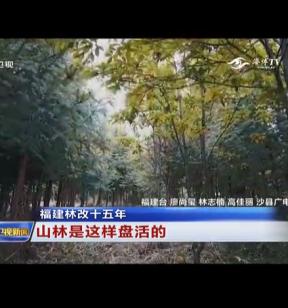 福建林改十五年 山林是这样盘活的