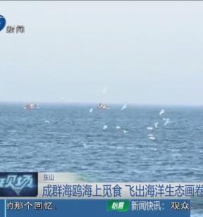 成群海鸥海上觅食 飞出海洋生态画卷