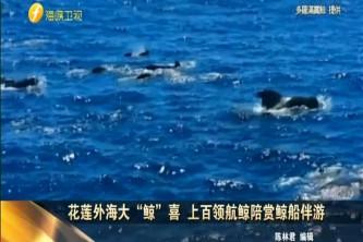 """花莲外海大""""鲸""""喜 上百领航鲸陪赏鲸船伴游"""
